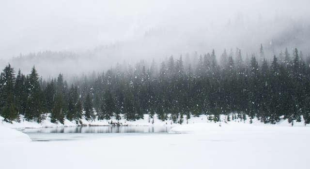 Paysage de forêt sous la neige