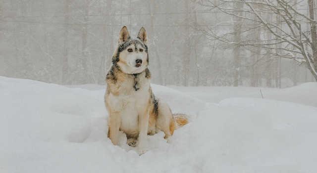 Chien dans la neige