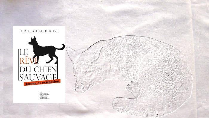 A l'arrière plan, dessin d'un dingo (chien sauvage d'Australie), au premier plan, la couverture du livre de Deborah Bird Rose, Le rêve du chien sauvage